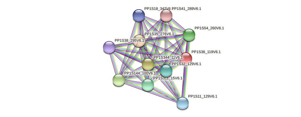PP1S36_119V6.1 protein (Physcomitrella patens) - STRING interaction network