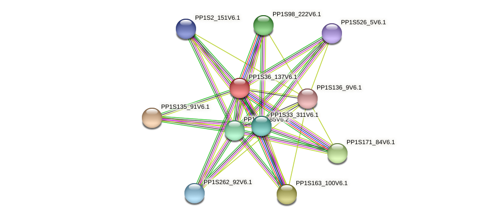 PP1S36_137V6.1 protein (Physcomitrella patens) - STRING interaction network