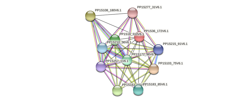 PP1S36_172V6.1 protein (Physcomitrella patens) - STRING interaction network