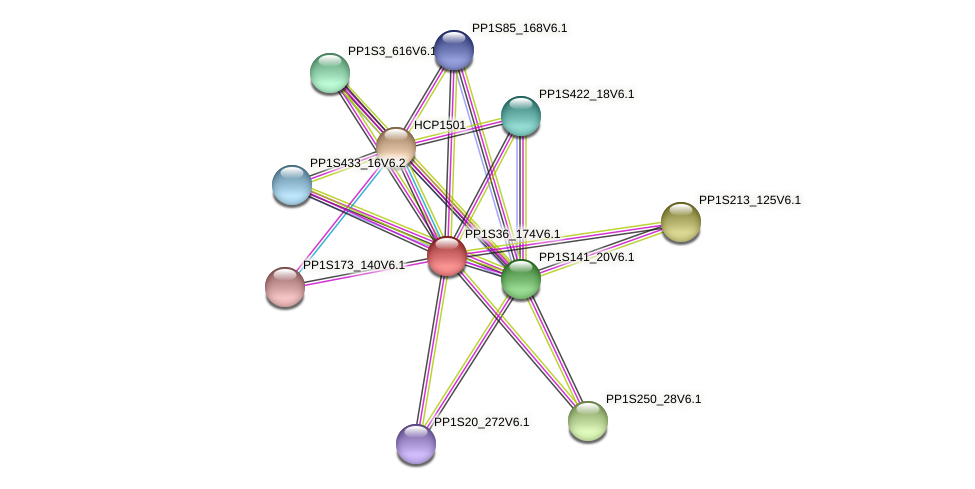 PP1S36_174V6.1 protein (Physcomitrella patens) - STRING interaction network