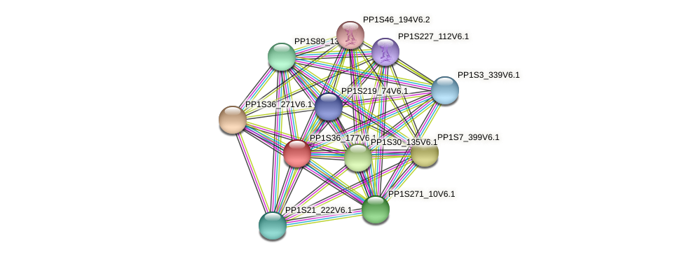 PP1S36_177V6.1 protein (Physcomitrella patens) - STRING interaction network