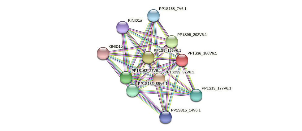 PP1S36_180V6.1 protein (Physcomitrella patens) - STRING interaction network