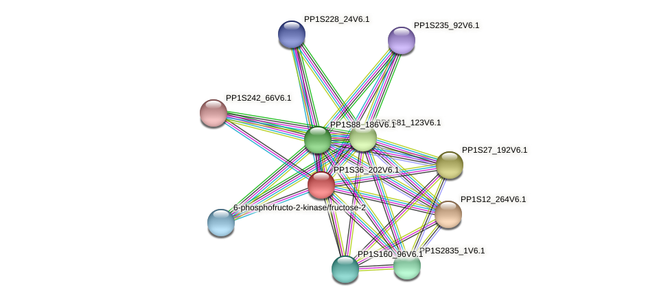 PP1S36_202V6.1 protein (Physcomitrella patens) - STRING interaction network