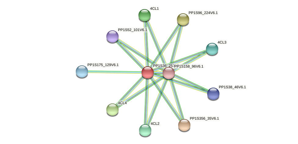 PP1S36_253V6.1 protein (Physcomitrella patens) - STRING interaction network