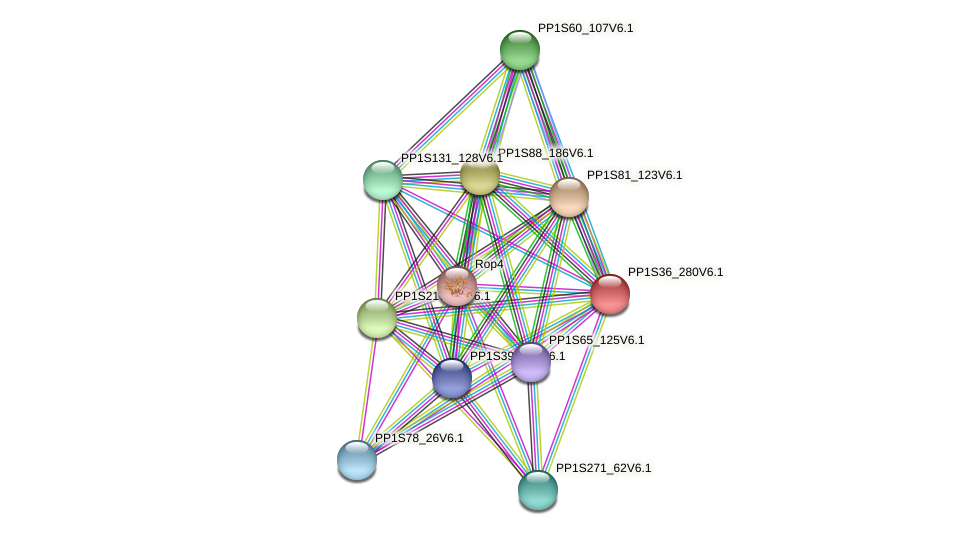 PP1S36_280V6.1 protein (Physcomitrella patens) - STRING interaction network