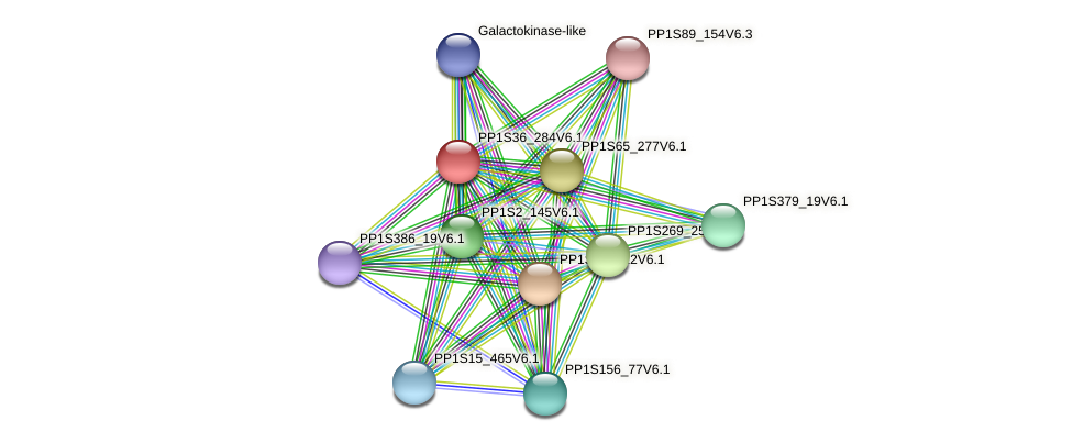 PP1S36_284V6.1 protein (Physcomitrella patens) - STRING interaction network