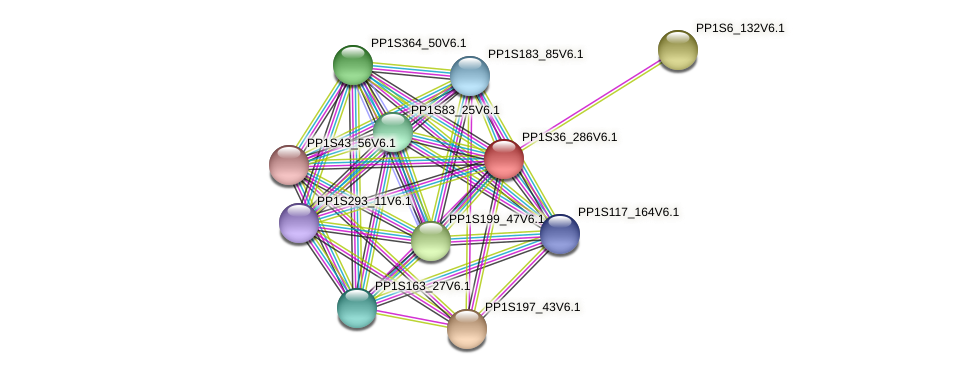 PP1S36_286V6.1 protein (Physcomitrella patens) - STRING interaction network