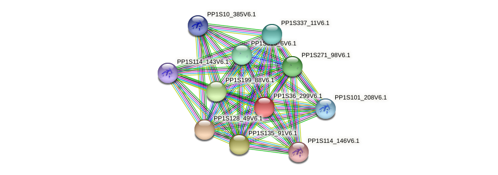 PP1S36_299V6.1 protein (Physcomitrella patens) - STRING interaction network
