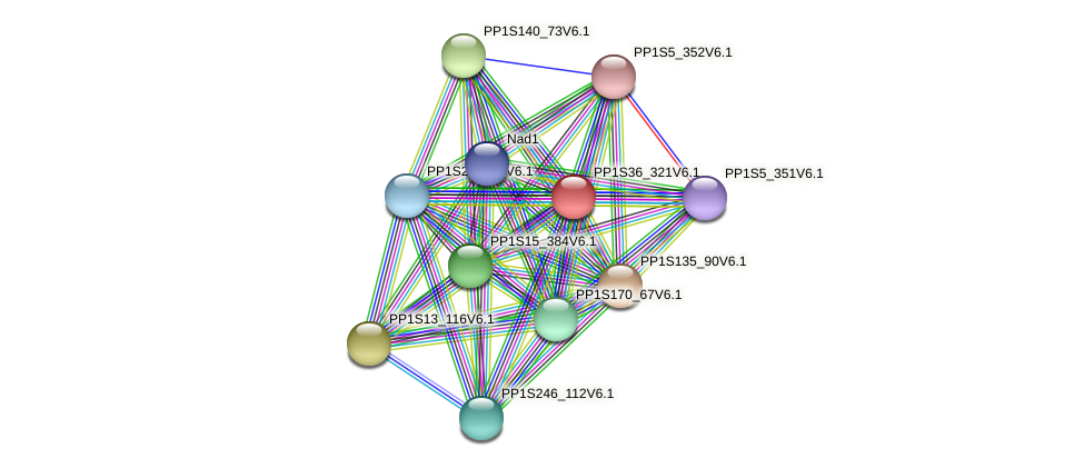 PP1S36_321V6.1 protein (Physcomitrella patens) - STRING interaction network