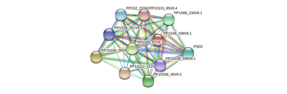 PP1S36_339V6.1 protein (Physcomitrella patens) - STRING interaction network