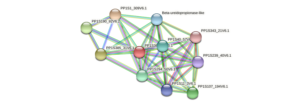 PP1S36_341V6.1 protein (Physcomitrella patens) - STRING interaction network
