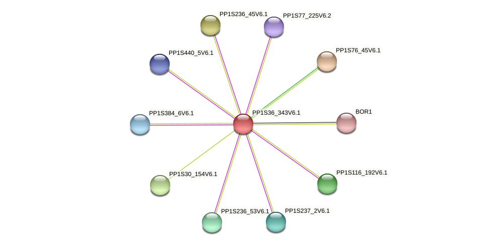 PP1S36_343V6.1 protein (Physcomitrella patens) - STRING interaction network