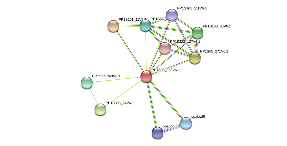PP1S36_358V6.1 protein (Physcomitrella patens) - STRING interaction network