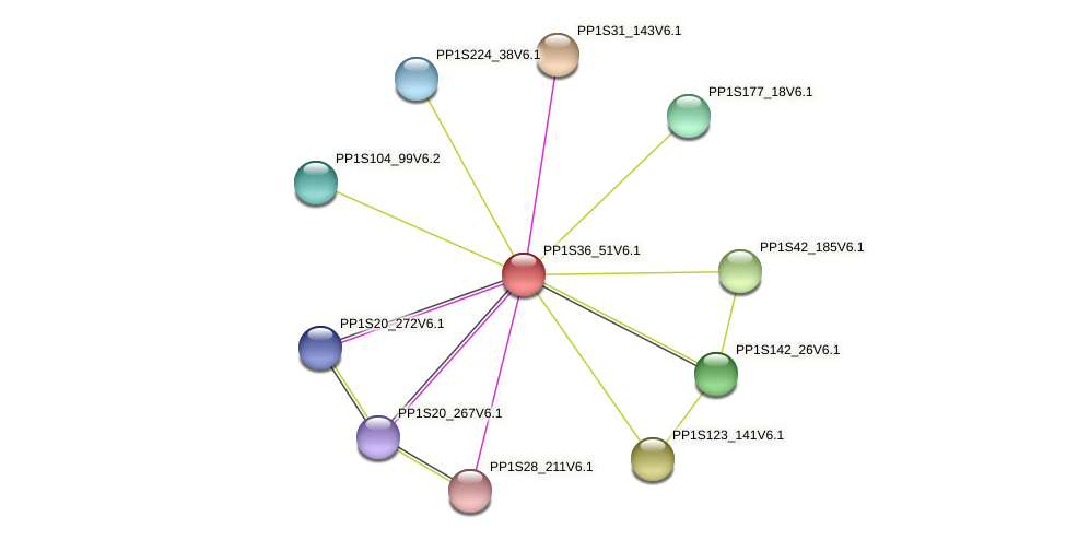 PP1S36_51V6.1 protein (Physcomitrella patens) - STRING interaction network