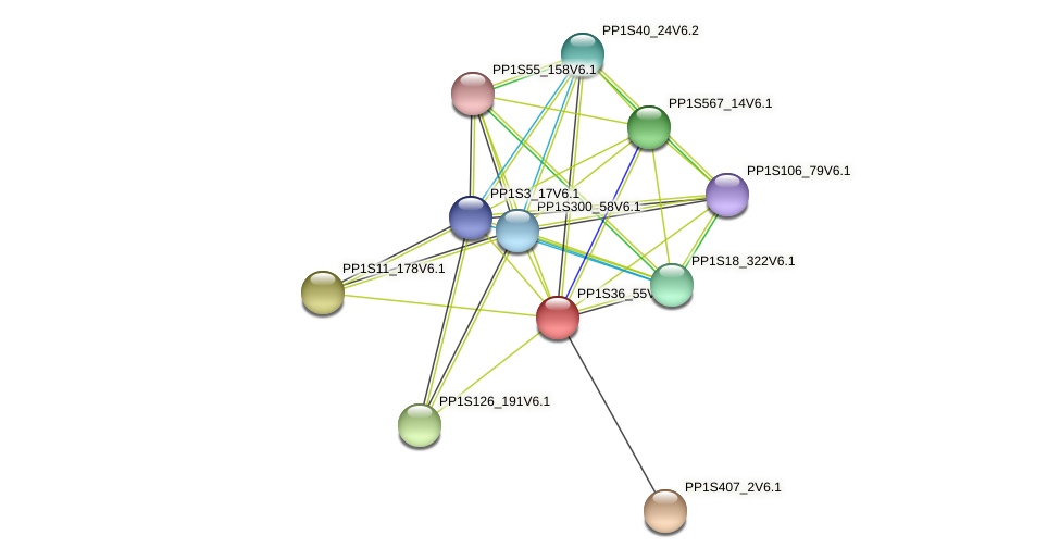 PP1S36_55V6.1 protein (Physcomitrella patens) - STRING interaction network