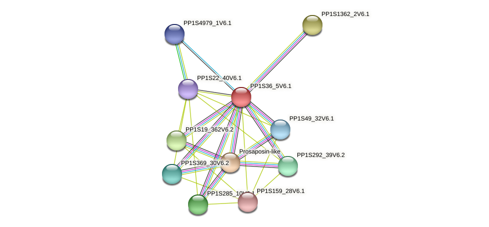 PP1S36_5V6.1 protein (Physcomitrella patens) - STRING interaction network