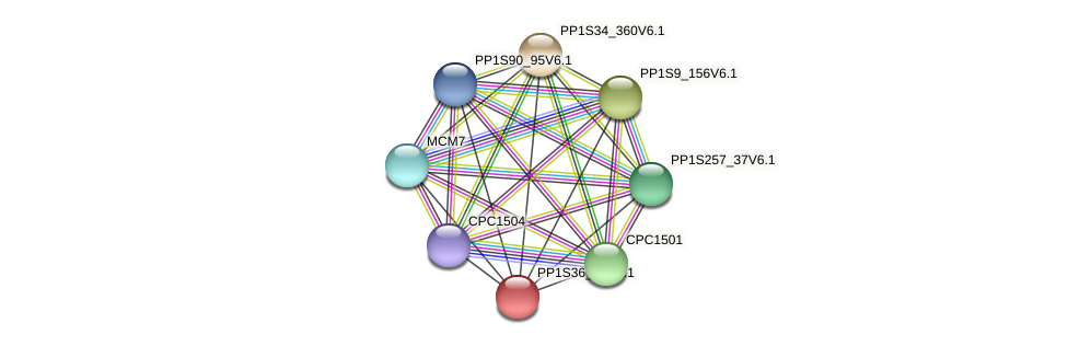 PP1S36_60V6.1 protein (Physcomitrella patens) - STRING interaction network