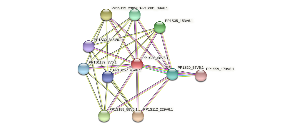 PP1S36_68V6.1 protein (Physcomitrella patens) - STRING interaction network