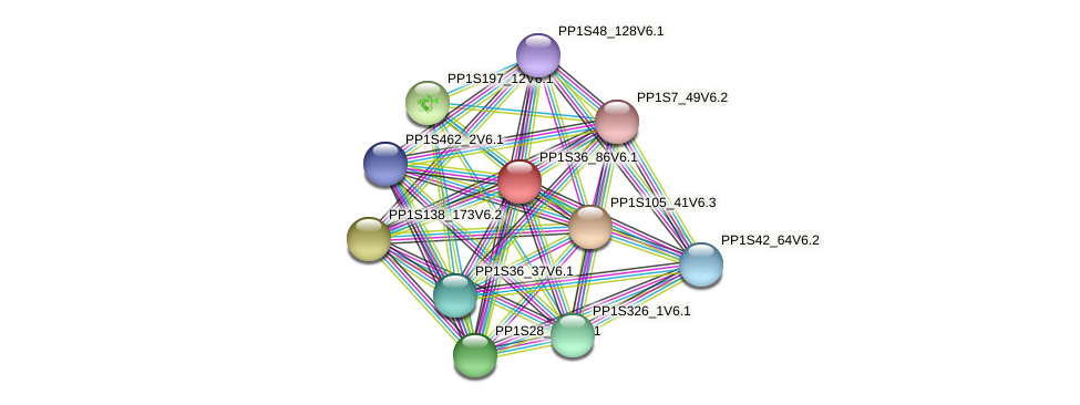 PP1S36_86V6.1 protein (Physcomitrella patens) - STRING interaction network