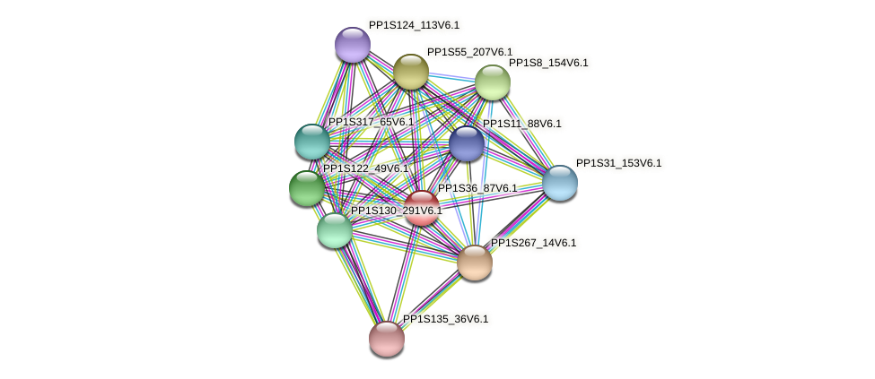 PP1S36_87V6.1 protein (Physcomitrella patens) - STRING interaction network
