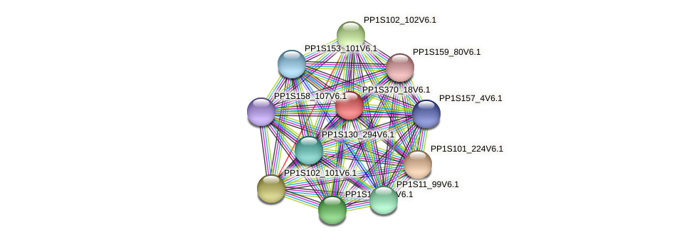 PP1S370_18V6.1 protein (Physcomitrella patens) - STRING interaction network