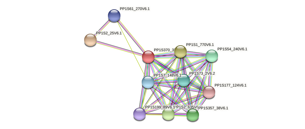 PP1S370_33V6.1 protein (Physcomitrella patens) - STRING interaction network