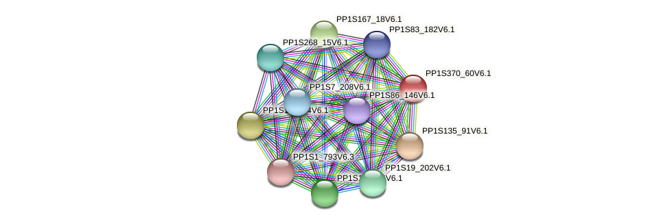 PP1S370_60V6.1 protein (Physcomitrella patens) - STRING interaction network