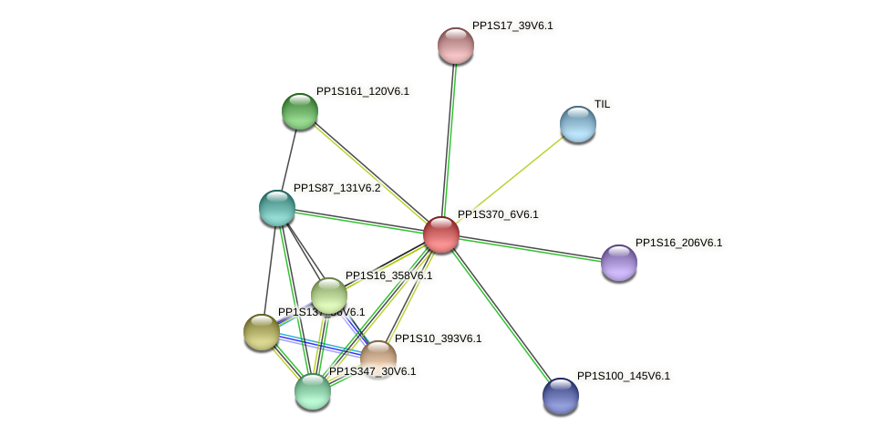 PP1S370_6V6.1 protein (Physcomitrella patens) - STRING interaction network