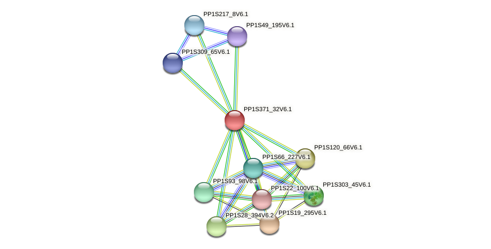 PP1S371_32V6.1 protein (Physcomitrella patens) - STRING interaction network