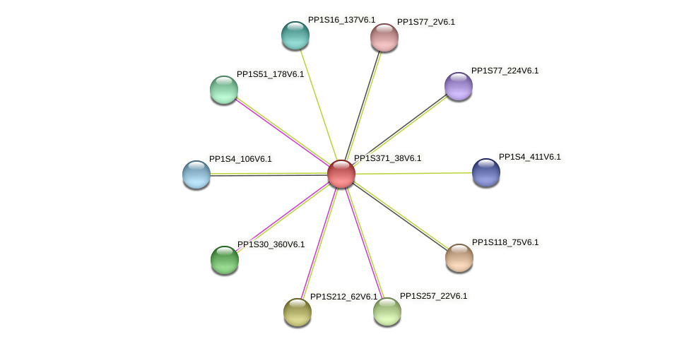 PP1S371_38V6.1 protein (Physcomitrella patens) - STRING interaction network
