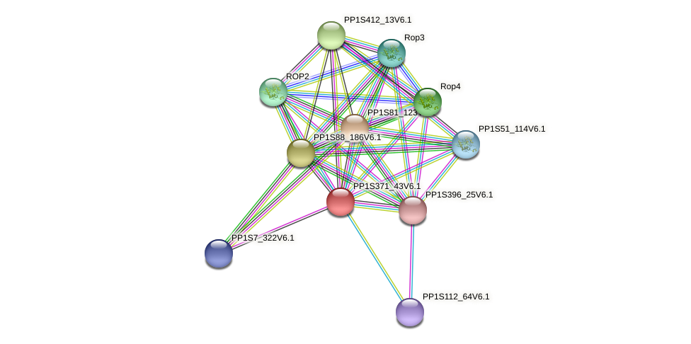 PP1S371_43V6.1 protein (Physcomitrella patens) - STRING interaction network