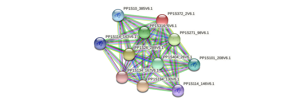 PP1S372_2V6.1 protein (Physcomitrella patens) - STRING interaction network