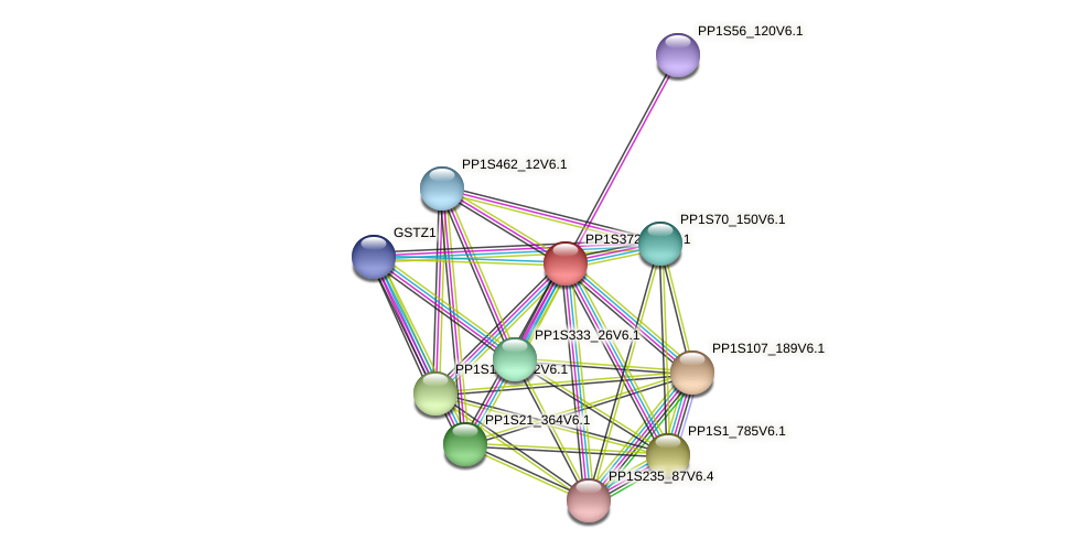 PP1S372_31V6.1 protein (Physcomitrella patens) - STRING interaction network