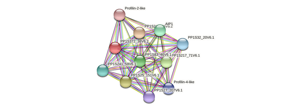 PP1S372_38V6.1 protein (Physcomitrella patens) - STRING interaction network