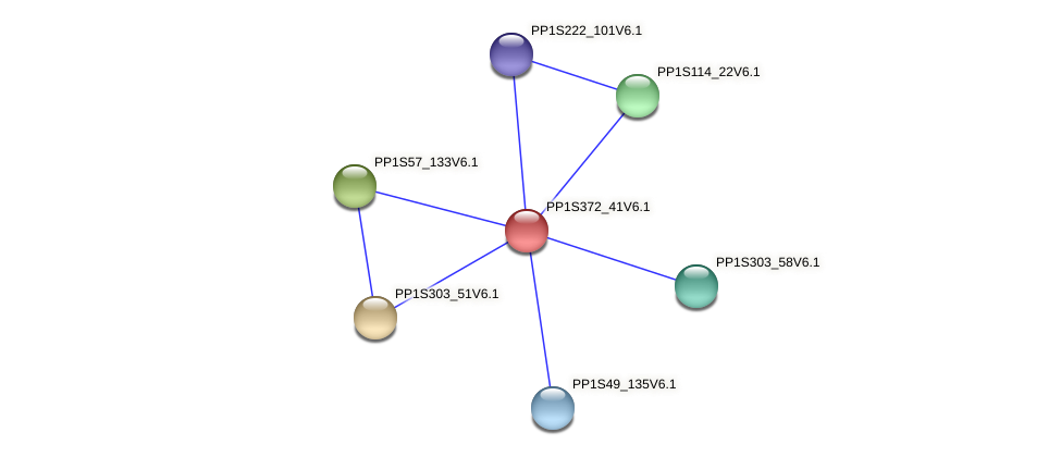 PP1S372_41V6.1 protein (Physcomitrella patens) - STRING interaction network