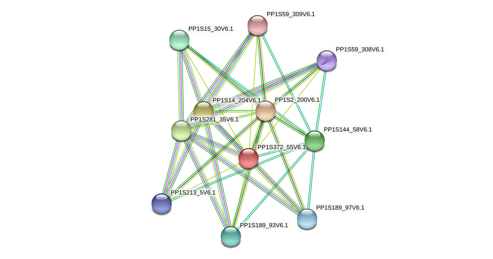 PP1S372_55V6.1 protein (Physcomitrella patens) - STRING interaction network
