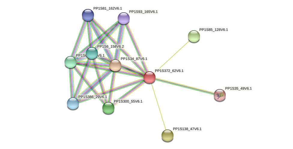 PP1S372_62V6.1 protein (Physcomitrella patens) - STRING interaction network