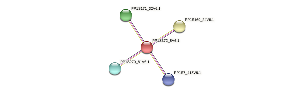 PP1S372_8V6.1 protein (Physcomitrella patens) - STRING interaction network