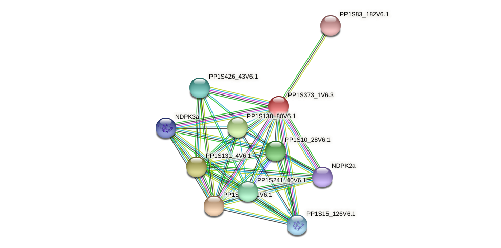 PP1S373_1V6.1 protein (Physcomitrella patens) - STRING interaction network