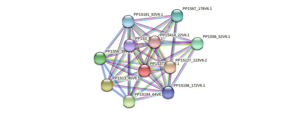 PP1S373_40V6.1 protein (Physcomitrella patens) - STRING interaction network