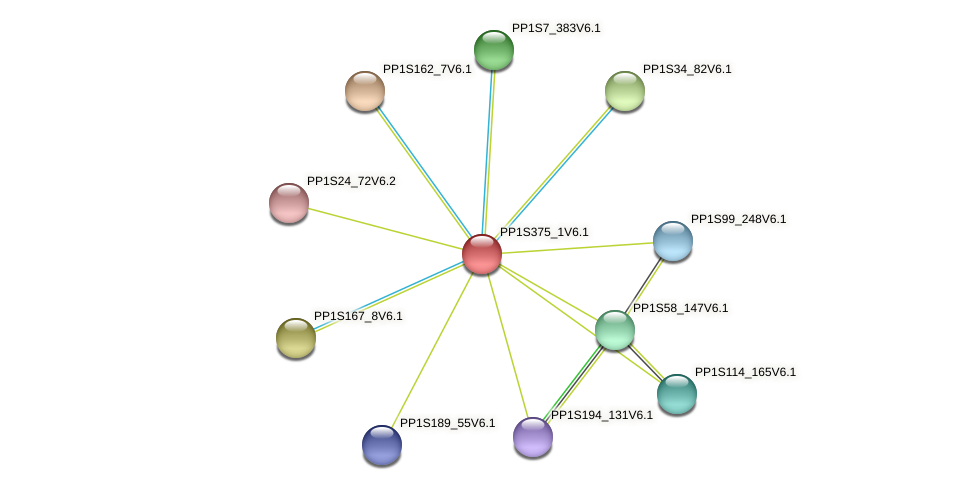 PP1S375_1V6.1 protein (Physcomitrella patens) - STRING interaction network