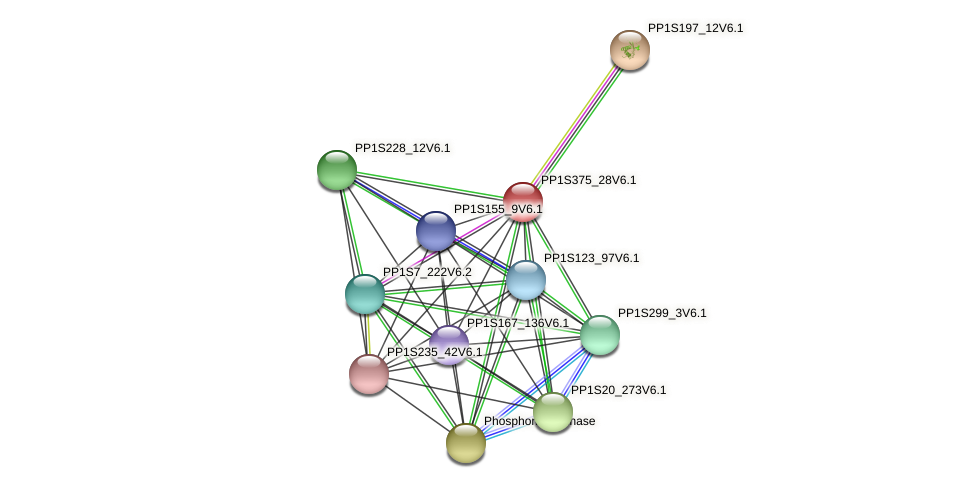PP1S375_28V6.1 protein (Physcomitrella patens) - STRING interaction network