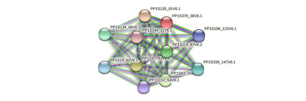PP1S376_36V6.1 protein (Physcomitrella patens) - STRING interaction network