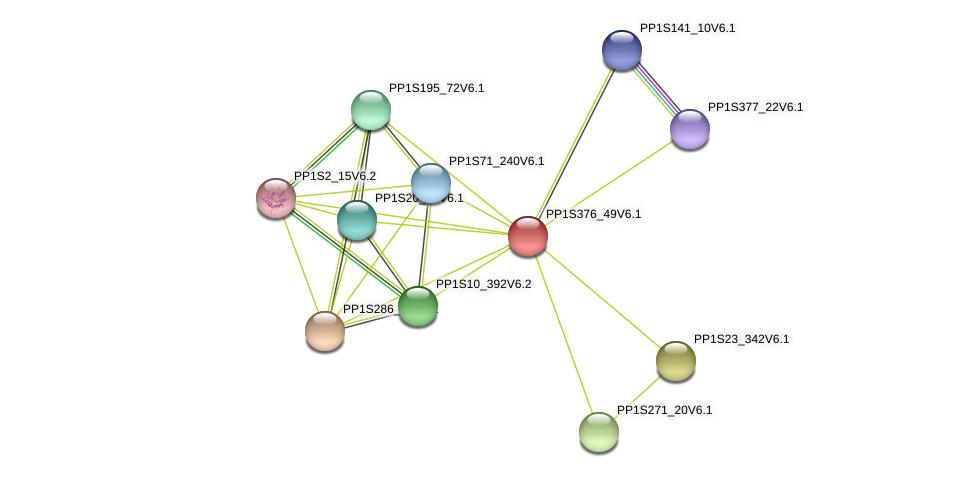 PP1S376_49V6.1 protein (Physcomitrella patens) - STRING interaction network