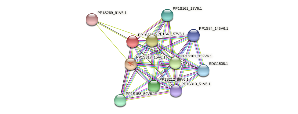PP1S376_4V6.1 protein (Physcomitrella patens) - STRING interaction network