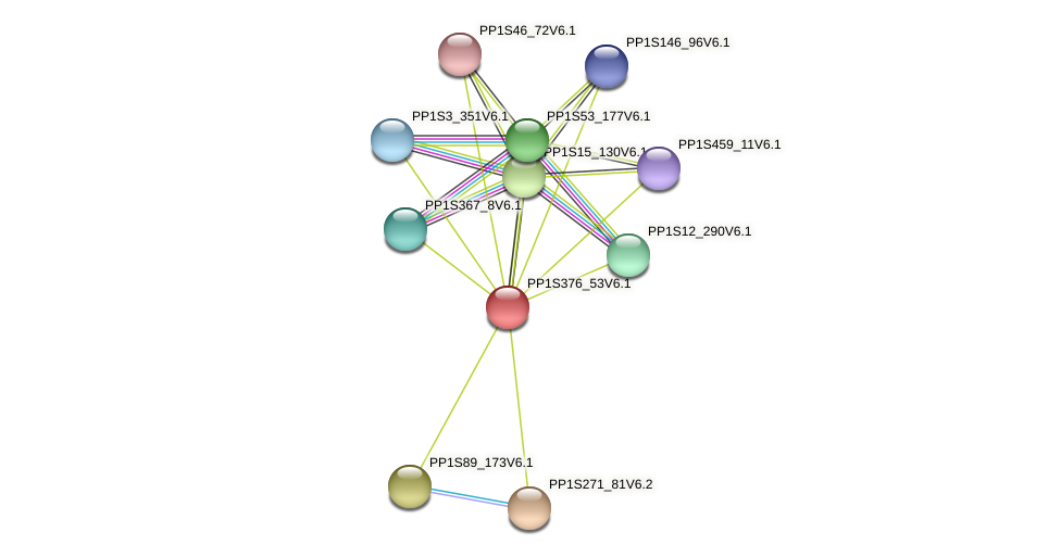 PP1S376_53V6.1 protein (Physcomitrella patens) - STRING interaction network