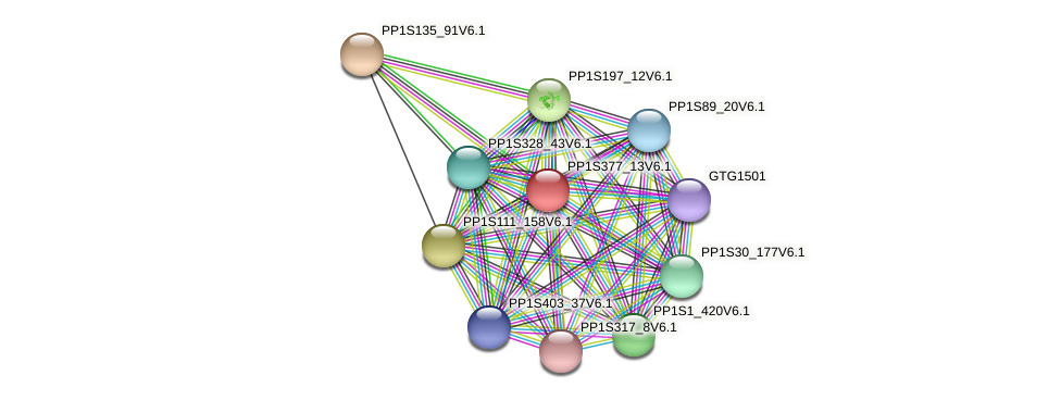PP1S377_13V6.1 protein (Physcomitrella patens) - STRING interaction network
