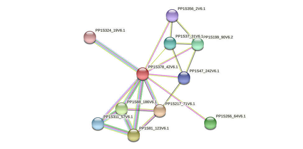 PP1S378_42V6.1 protein (Physcomitrella patens) - STRING interaction network