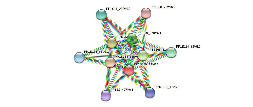 PP1S379_19V6.1 protein (Physcomitrella patens) - STRING interaction network