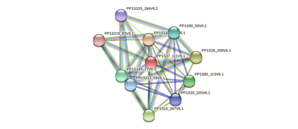 PP1S37_111V6.1 protein (Physcomitrella patens) - STRING interaction network